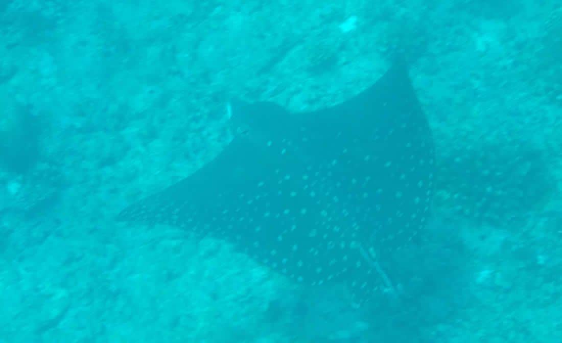 maldives-diving.jpg