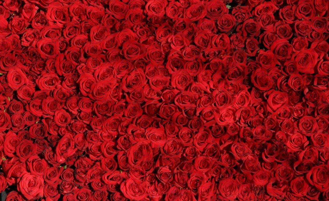 background-roses-rouges-1560x1040.jpg