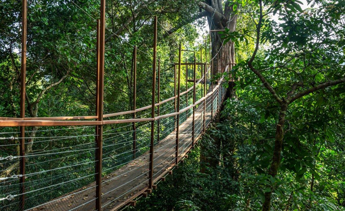 the-datai-langkawi-canopy-walk.jpg