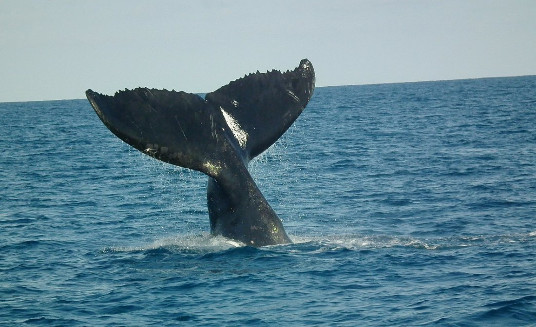 Whale Watching South Africa